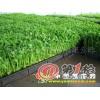 芽菜- 芽苗菜生产技术 芽菜栽培视频 芽菜生产新技术 芽苗菜图片