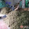 批发苔藓水苔无土栽培基质、兰花、蝴蝶兰扦插、育苗嫁接专用