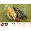 安平祥益厂家直销养殖钢丝网  养鸡围网  围栏网片