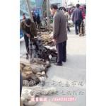 秦皇岛市狐貉貂养殖场