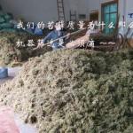 供应干苔藓 水苔 青苔 水草