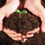 草炭土花肥营养土,花卉草炭土育苗大包价格