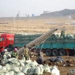 草炭土土壤改良育苗,东北草炭土多少钱一斤