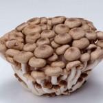 秸秆种香菇技术招商加盟