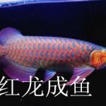 济南高新区热带鱼专卖店