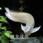 济南历下区热带鱼专卖店
